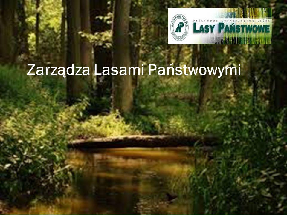 Zarządza Lasami Państwowymi