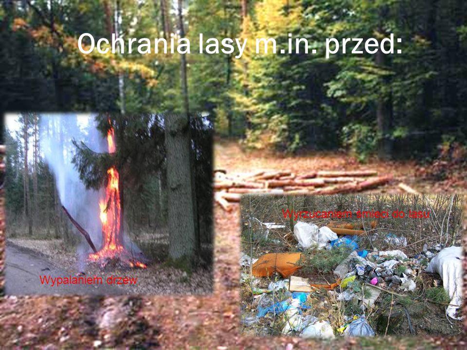 Ochrania lasy m.in. przed: Wypalaniem drzew Wyrzucaniem śmieci do lasu