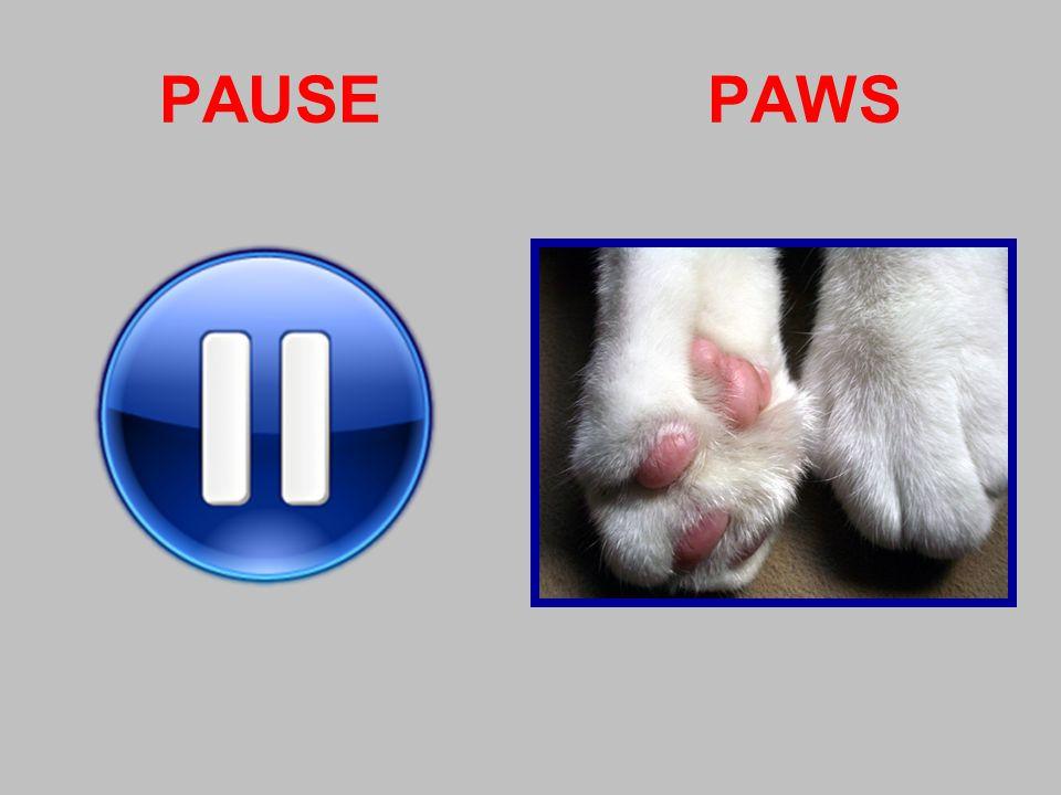 PAUSE PAWS