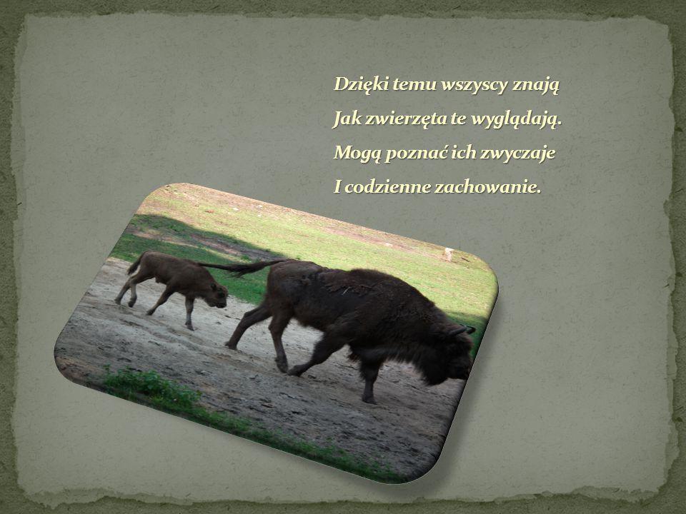 Także inne leśne zwierzęta, Gdy choroba je opęta Do zagrody są przyjmowane I opieką otaczane.