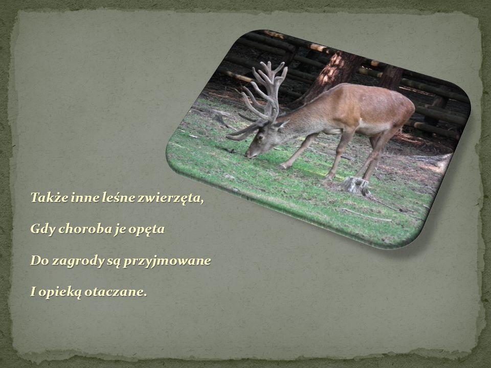 Pracownicy Wolińskiego Parku Narodowego, W ramach ochrony środowiska leśnego, W ramach ochrony środowiska leśnego, Dla dobra zwierząt zagrodą się opiekują I na miano przyjaciela lasu zasługują.
