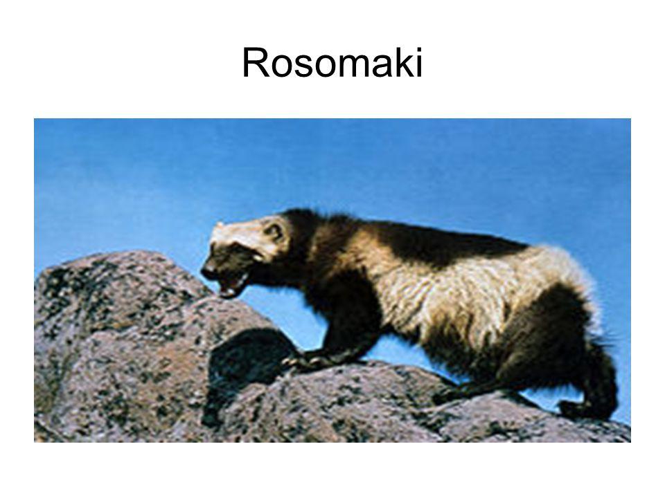 Rosomaki