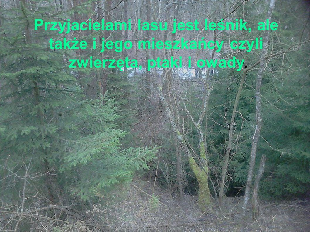 Przyjacielami lasu jest leśnik, ale także i jego mieszkańcy czyli zwierzęta, ptaki i owady.