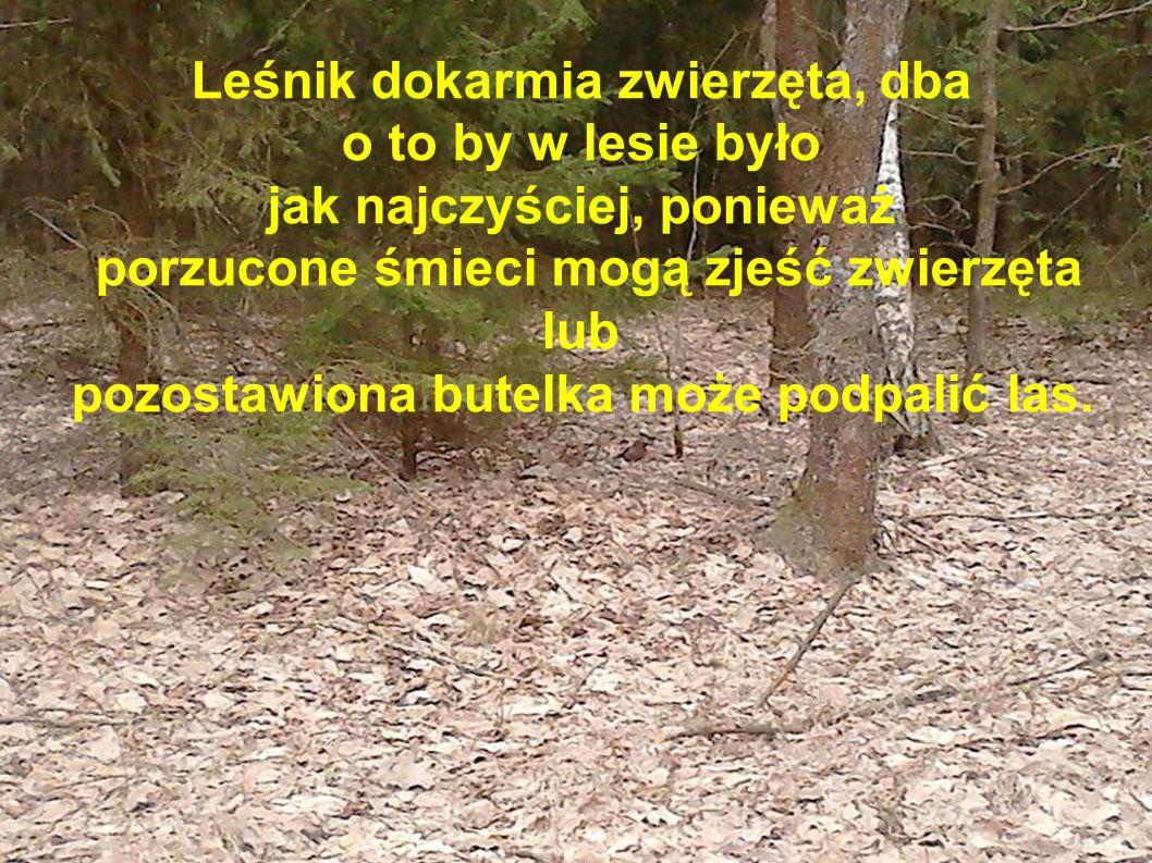 Leśnik dokarmia zwierzęta, dba o to by w lesie było jak najczyściej, ponieważ porzucone śmieci mogą zjeść zwierzęta lub pozostawiona butelka może podp