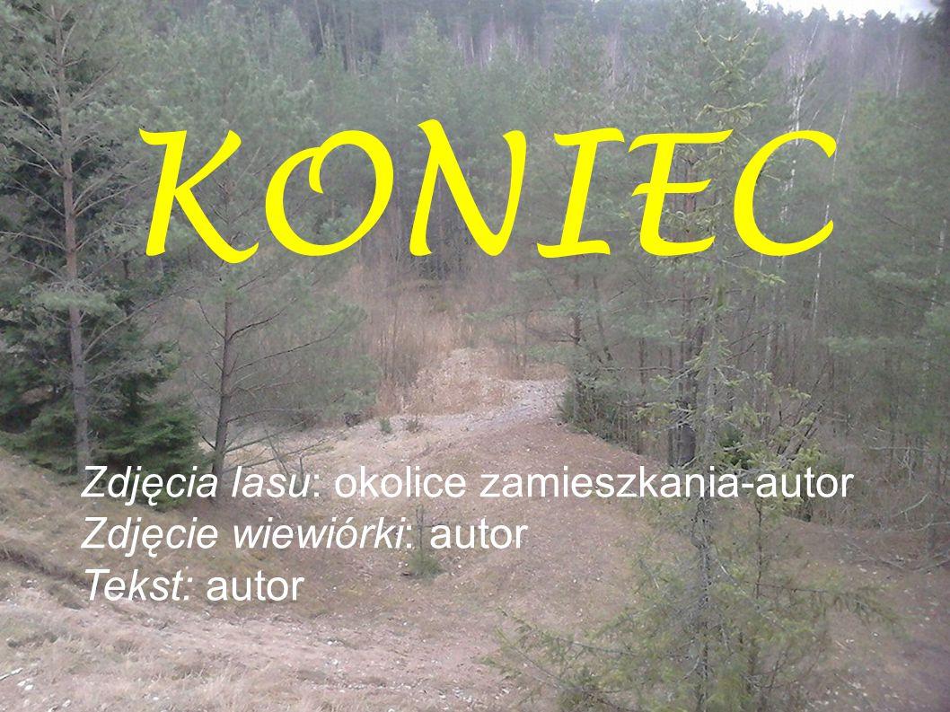 KONIEC Zdjęcia lasu: okolice zamieszkania-autor Zdjęcie wiewiórki: autor Tekst: autor