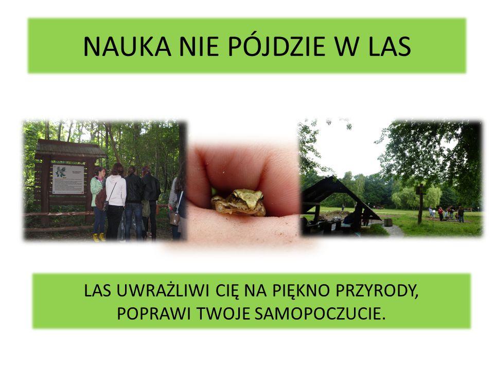 7,50 złotych- tyle kosztuje całodniowa wycieczka po lasach Warszawy.