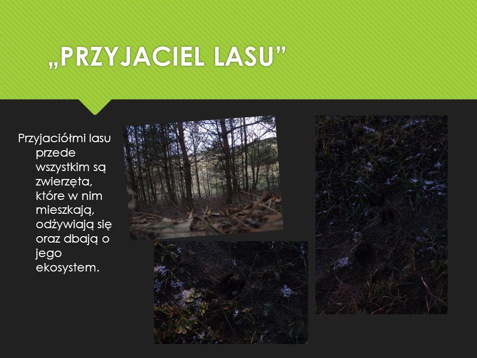 """""""PRZYJACIEL LASU Przyjaciółmi lasu przede wszystkim są zwierzęta, które w nim mieszkają, odżywiają się oraz dbają o jego ekosystem."""