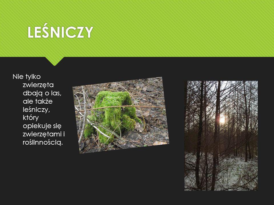 LEŚNICZY Nie tylko zwierzęta dbają o las, ale także leśniczy, który opiekuje się zwierzętami i roślinnością.
