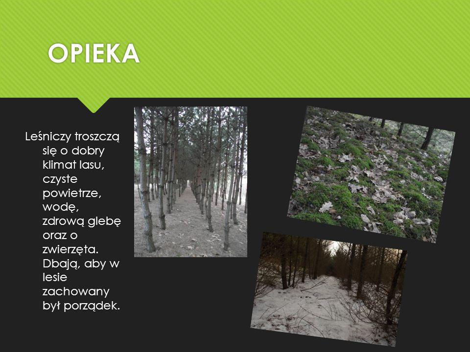 OPIEKA Leśniczy troszczą się o dobry klimat lasu, czyste powietrze, wodę, zdrową glebę oraz o zwierzęta.