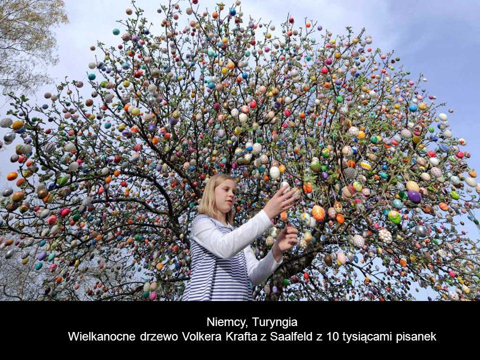 Volker Kraft Wielkanoc Drzewo (Niemcy) do kilku tysięcy jaj.