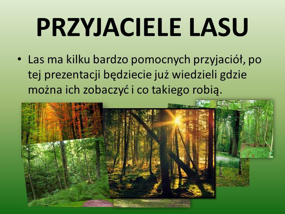 PIERWSZA PRZYJACIÓŁKA MRÓWKA Jestem bardzo pracowita kręcę się po całym lesie bardzo dużo też pracuję kopce z igieł szybko buduje.