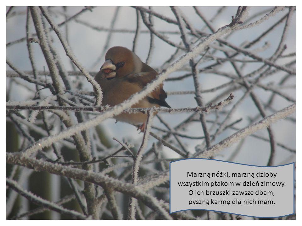 Marzną nóżki, marzną dzioby wszystkim ptakom w dzień zimowy.