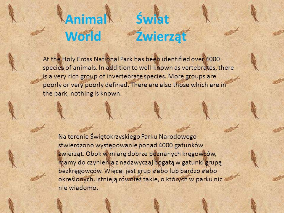 Świat Zwierząt Na terenie Świętokrzyskiego Parku Narodowego stwierdzono występowanie ponad 4000 gatunków zwierząt. Obok w miarę dobrze poznanych kręgo