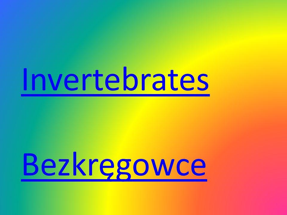 Bezkręgowce Invertebrates