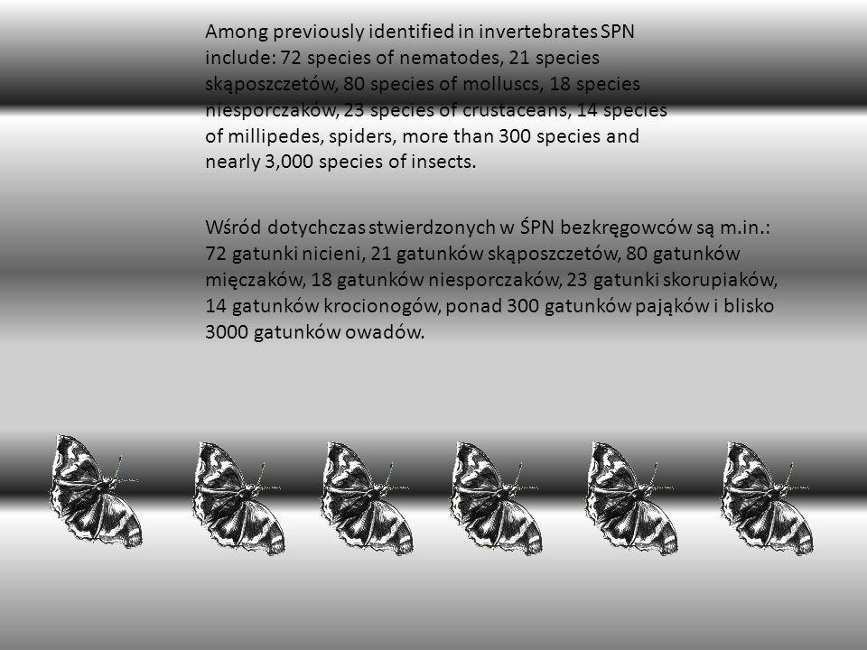 Wśród dotychczas stwierdzonych w ŚPN bezkręgowców są m.in.: 72 gatunki nicieni, 21 gatunków skąposzczetów, 80 gatunków mięczaków, 18 gatunków niesporc