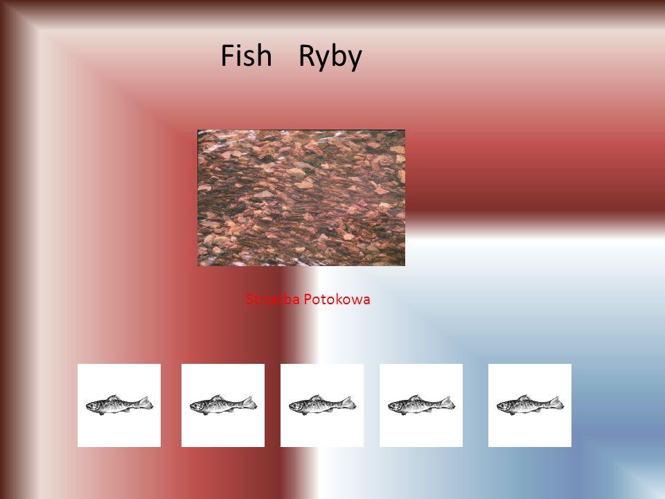 RybyFish Strzelba Potokowa
