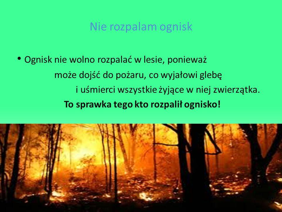Nie rozpalam ognisk Ognisk nie wolno rozpalać w lesie, ponieważ może dojść do pożaru, co wyjałowi glebę i uśmierci wszystkie żyjące w niej zwierzątka.