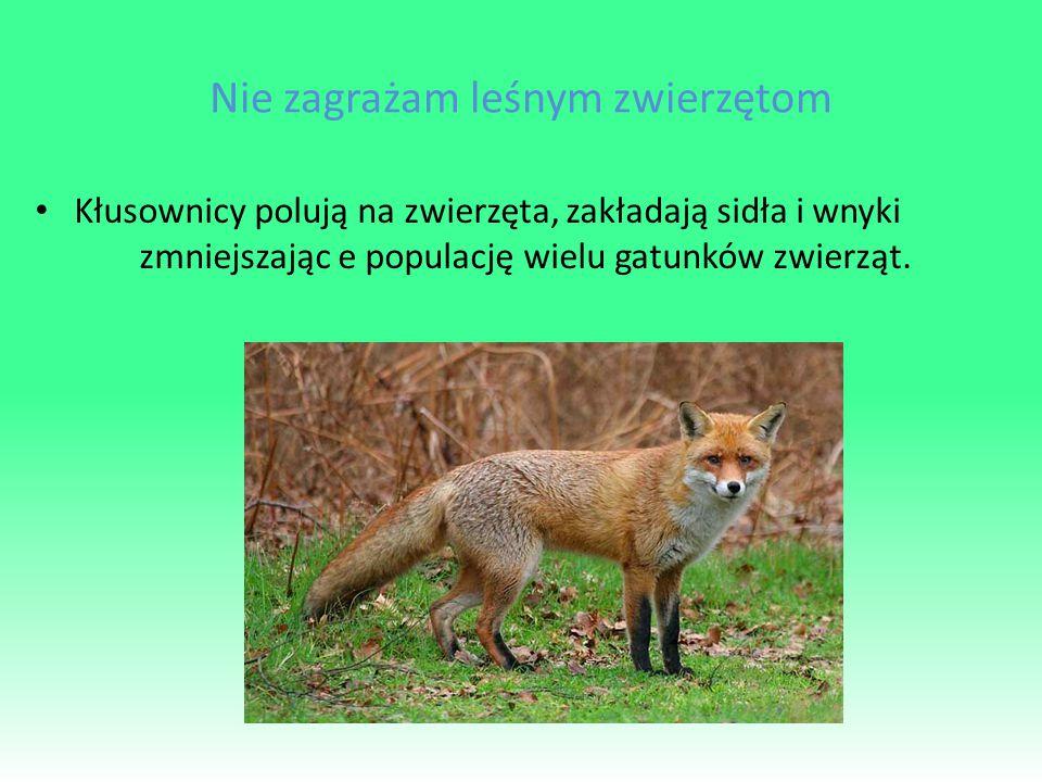 Nie zagrażam leśnym zwierzętom Kłusownicy polują na zwierzęta, zakładają sidła i wnyki zmniejszając e populację wielu gatunków zwierząt.