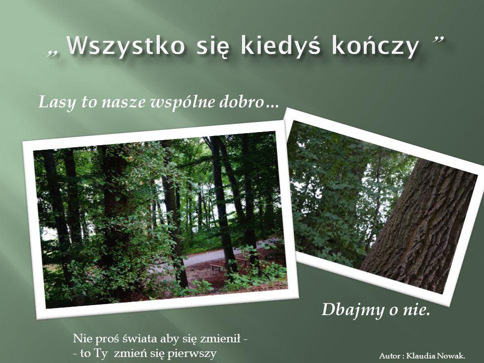 Lasy to nasze wspólne dobro… Dbajmy o nie.Autor : Klaudia Nowak.
