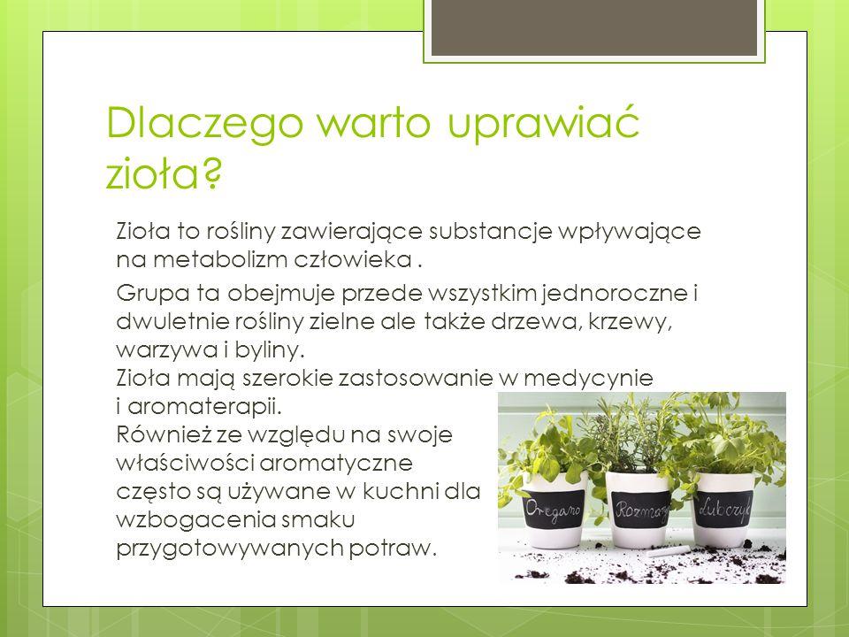 Dlaczego warto uprawiać zioła? Zioła to rośliny zawierające substancje wpływające na metabolizm człowieka. Grupa ta obejmuje przede wszystkim jednoroc