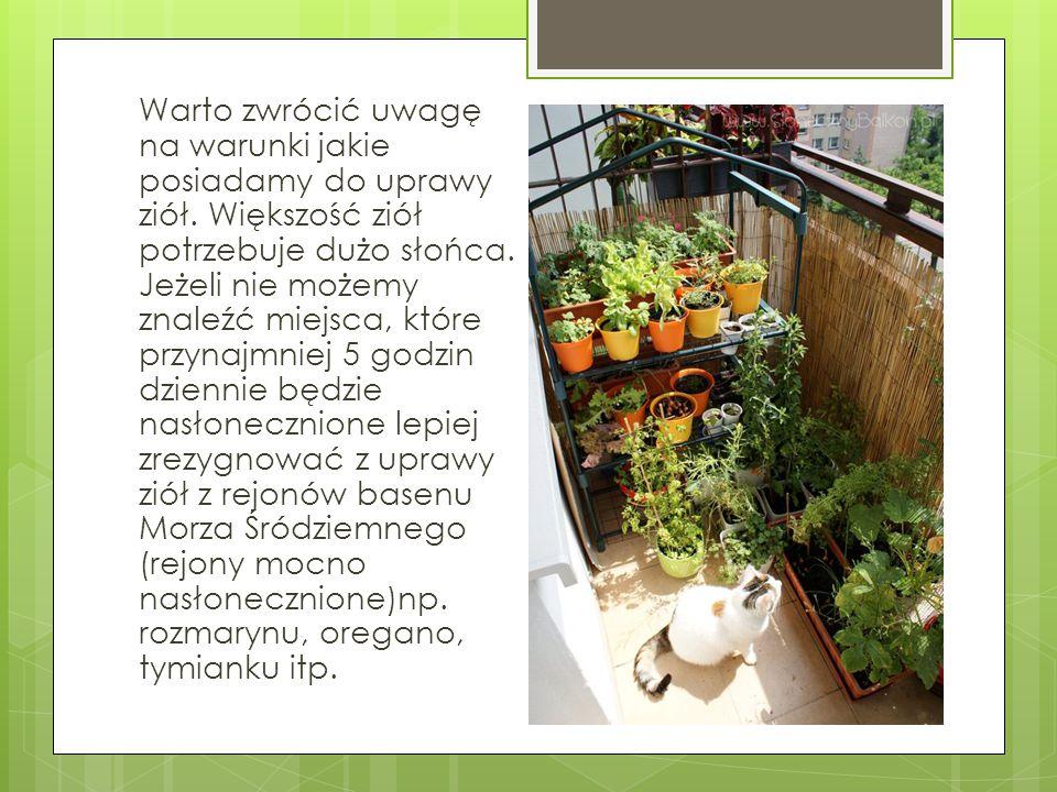Warto zwrócić uwagę na warunki jakie posiadamy do uprawy ziół. Większość ziół potrzebuje dużo słońca. Jeżeli nie możemy znaleźć miejsca, które przynaj