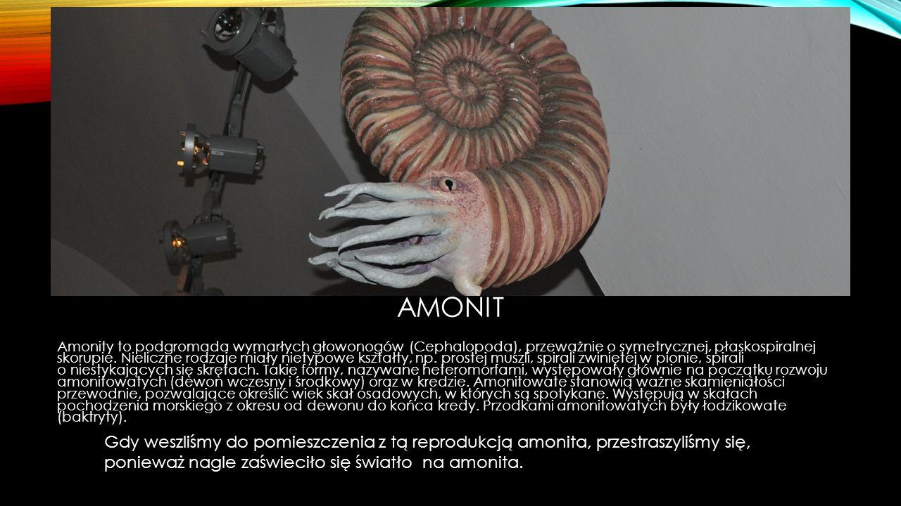 AMONIT Amonity to podgromada wymarłych głowonogów (Cephalopoda), przeważnie o symetrycznej, płaskospiralnej skorupie. Nieliczne rodzaje miały nietypow