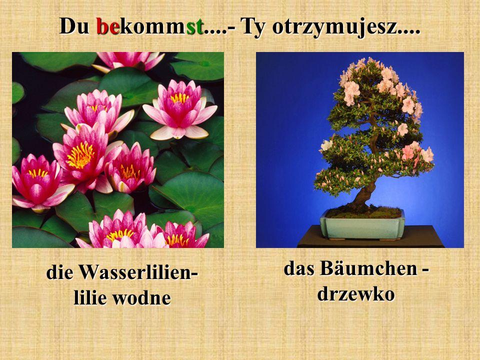 Du bekommst....- Ty otrzymujesz.... die Wasserlilien- lilie wodne das Bäumchen - drzewko
