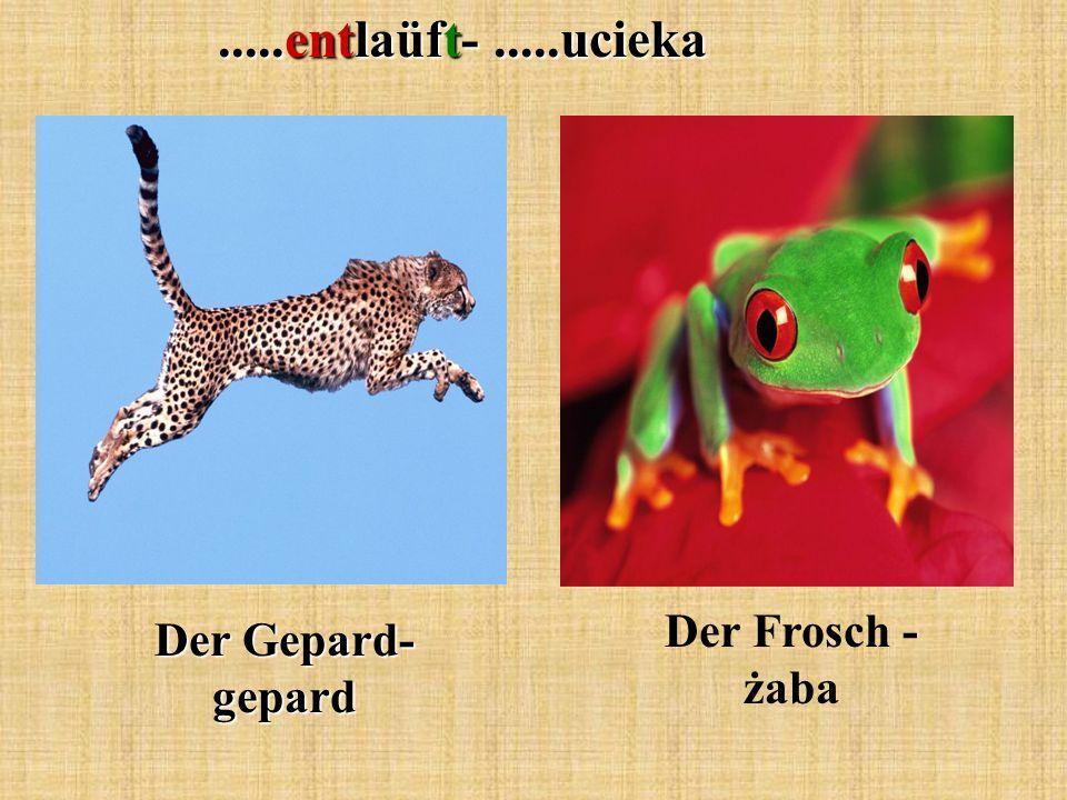 .....entlaüft-.....ucieka Der Gepard- gepard Der Frosch - żaba