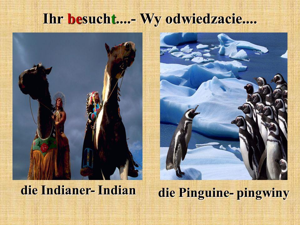 Ihr besucht....- Wy odwiedzacie.... die Indianer- Indian die Pinguine- pingwiny