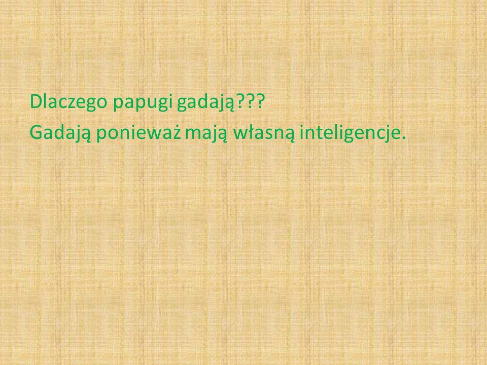 Dlaczego papugi gadają??? Gadają ponieważ mają własną inteligencje.