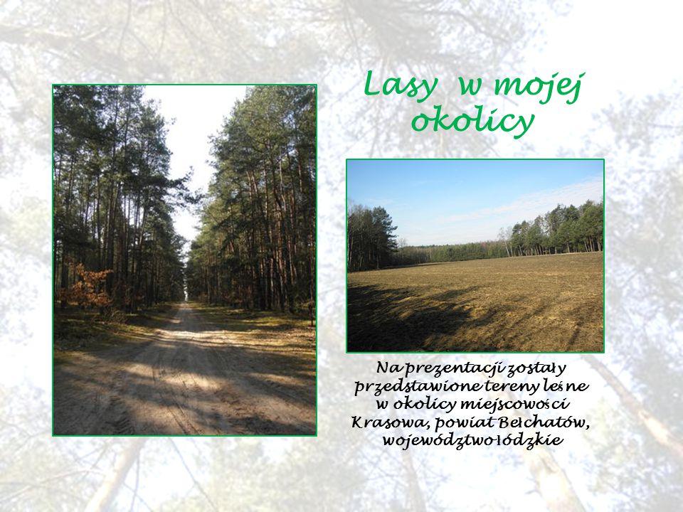 Lasy w mojej okolicy Na prezentacji zosta ł y przedstawione tereny le ś ne w okolicy miejscowo ś ci Krasowa, powiat Be ł chatów, województwo ł ódzkie