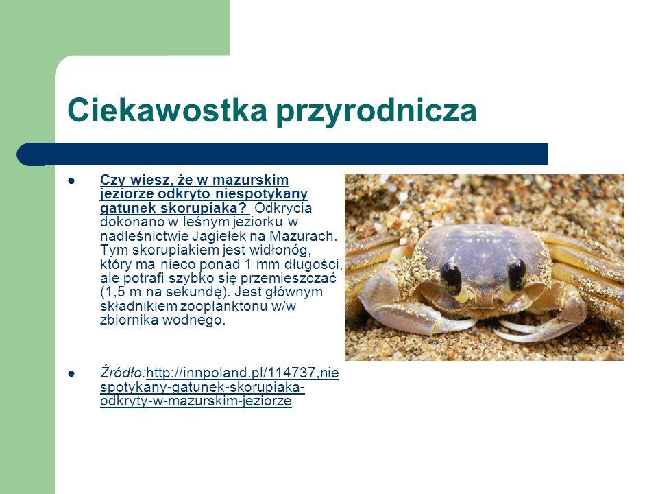 Ciekawostka przyrodnicza Czy wiesz, że w mazurskim jeziorze odkryto niespotykany gatunek skorupiaka? Odkrycia dokonano w leśnym jeziorku w nadleśnictw