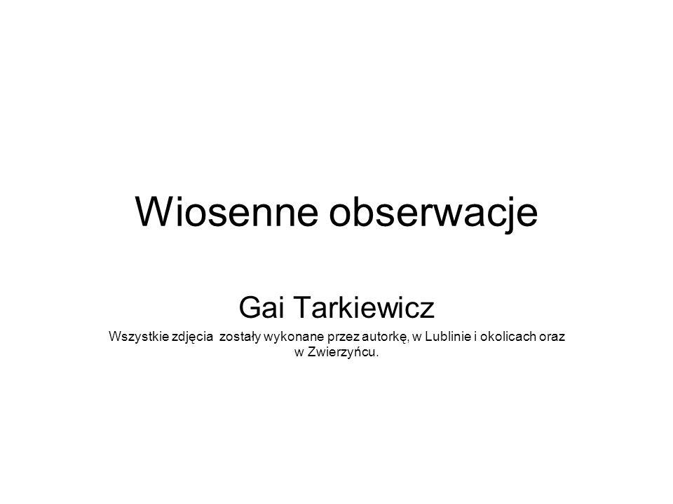 Wiosenne obserwacje Gai Tarkiewicz Wszystkie zdjęcia zostały wykonane przez autorkę, w Lublinie i okolicach oraz w Zwierzyńcu.