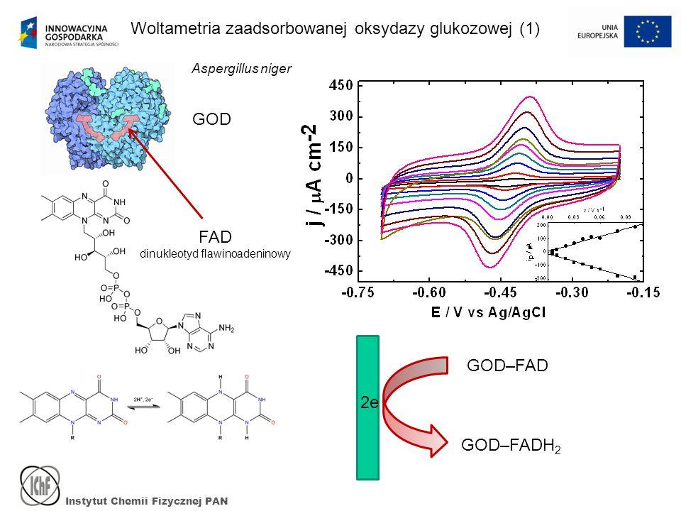 Instytut Chemii Fizycznej PAN Woltametria zaadsorbowanej oksydazy glukozowej (1) GOD FAD dinukleotyd flawinoadeninowy GOD–FAD GOD–FADH 2 2e Aspergillus niger