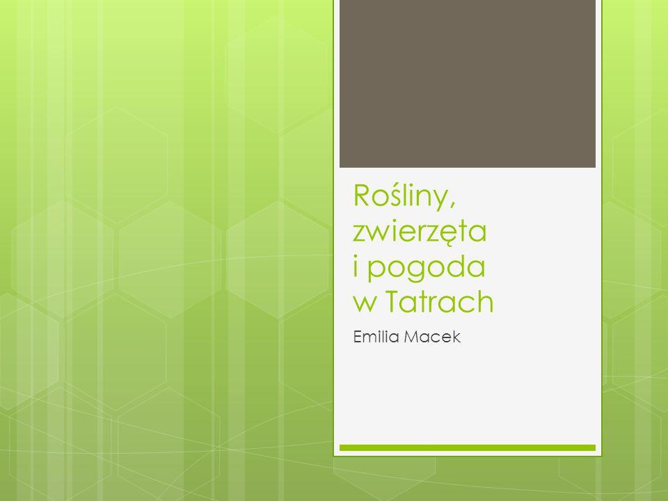 Rośliny, zwierzęta i pogoda w Tatrach Emilia Macek