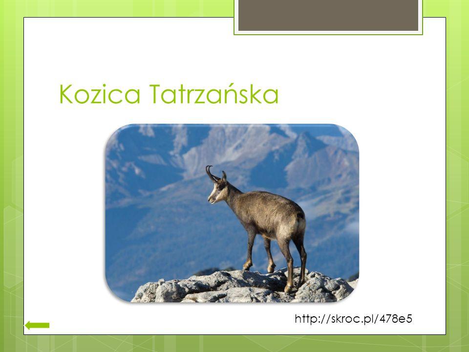 Kozica Tatrzańska http://skroc.pl/478e5