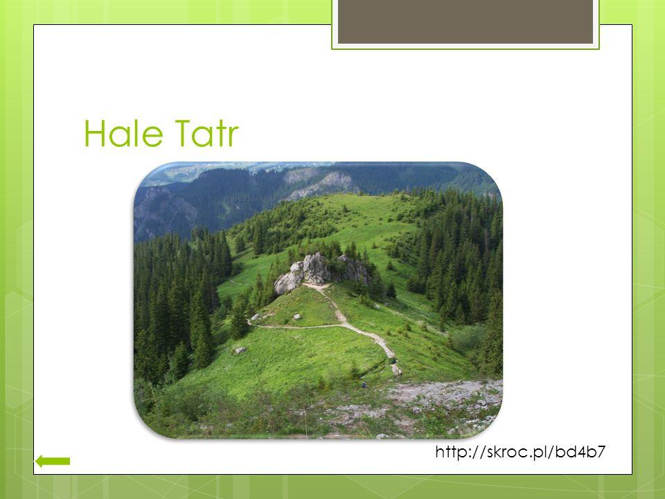 Hale Tatr http://skroc.pl/bd4b7
