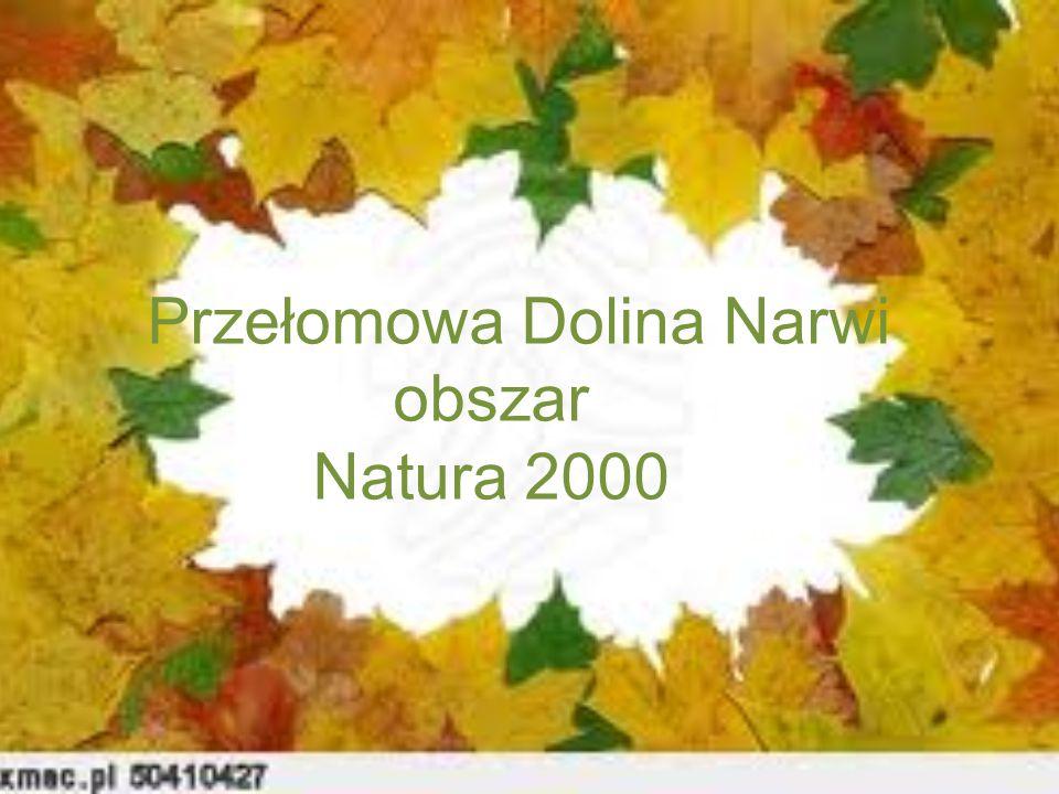 Przełomowa Dolina Narwi obszar Natura 2000
