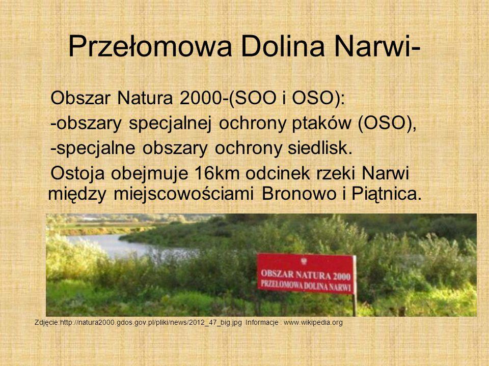 Rzeka Narew Autor: Dawid Kościelecki