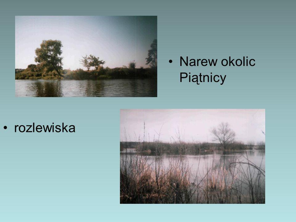 Na charakter terenu, układ gleb i bogatą roślinność silnie wpływają coroczne wylewy rzeki.