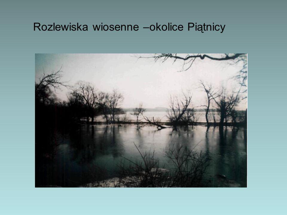 Autorzy: uczniowie 4b Martyna Dudzińska Dawid Kościelecki Julian Magdziak Bartosz Siwik wiktoria Szulc Lidia Wojewoda