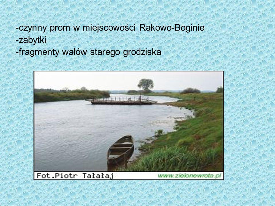 -czynny prom w miejscowości Rakowo-Boginie -zabytki -fragmenty wałów starego grodziska