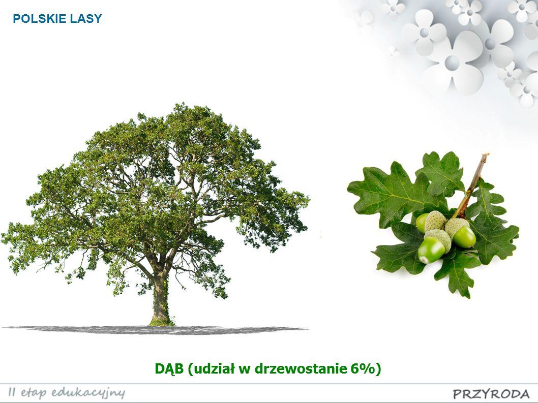POLSKIE LASY DĄB (udział w drzewostanie 6%)