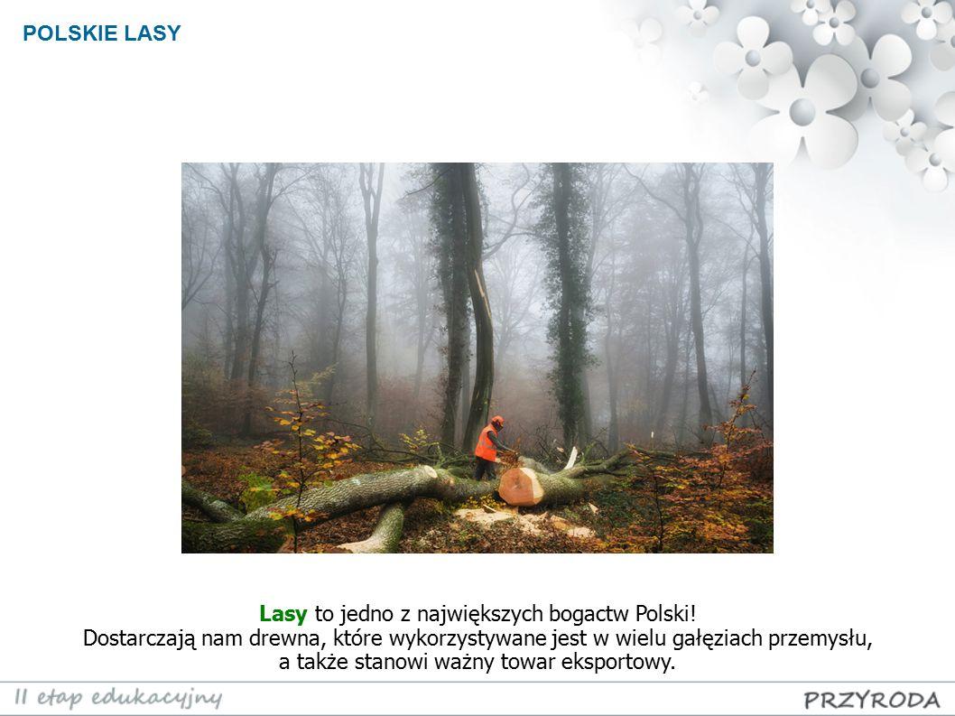 POLSKIE LASY Lasy to jedno z największych bogactw Polski! Dostarczają nam drewna, które wykorzystywane jest w wielu gałęziach przemysłu, a także stano