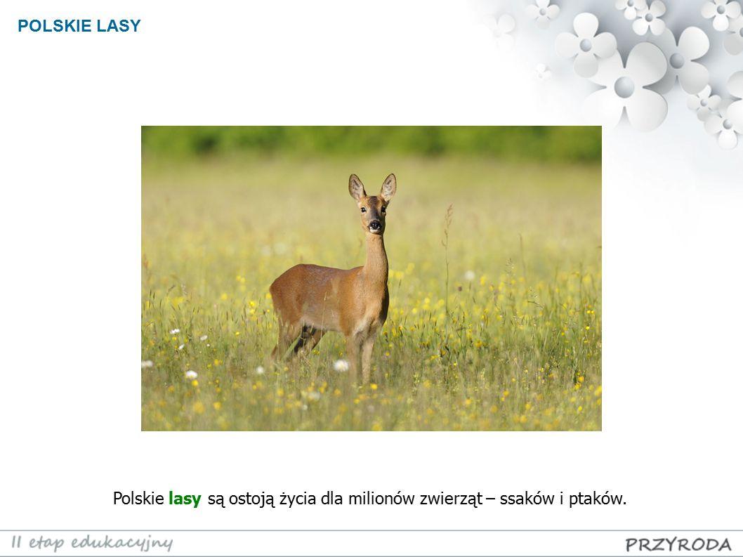 POLSKIE LASY Polskie lasy są ostoją życia dla milionów zwierząt – ssaków i ptaków.