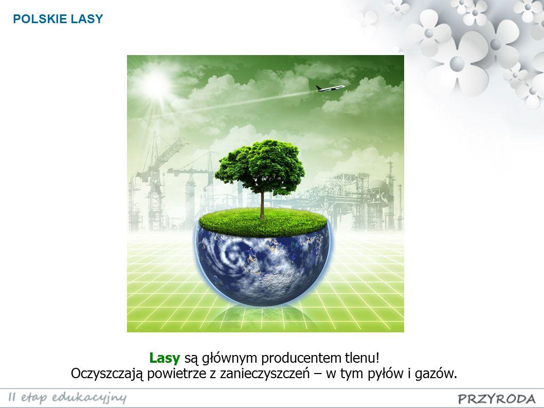POLSKIE LASY Lasy są głównym producentem tlenu! Oczyszczają powietrze z zanieczyszczeń – w tym pyłów i gazów.