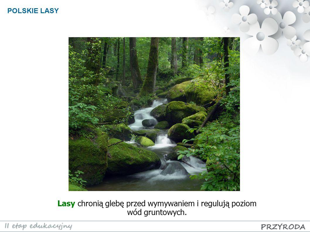 POLSKIE LASY Lasy chronią glebę przed wymywaniem i regulują poziom wód gruntowych.