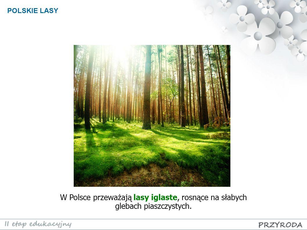 W Polsce przeważają lasy iglaste, rosnące na słabych glebach piaszczystych.