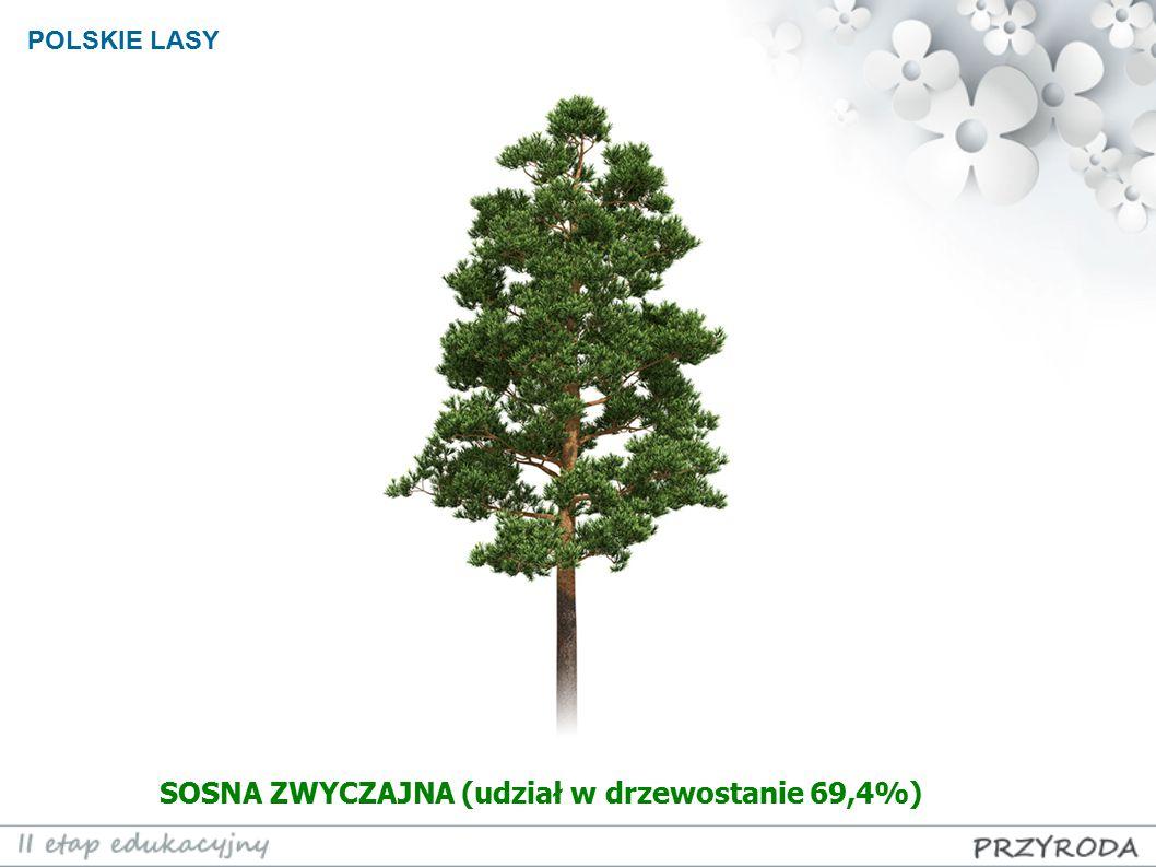 POLSKIE LASY SOSNA ZWYCZAJNA (udział w drzewostanie 69,4%)