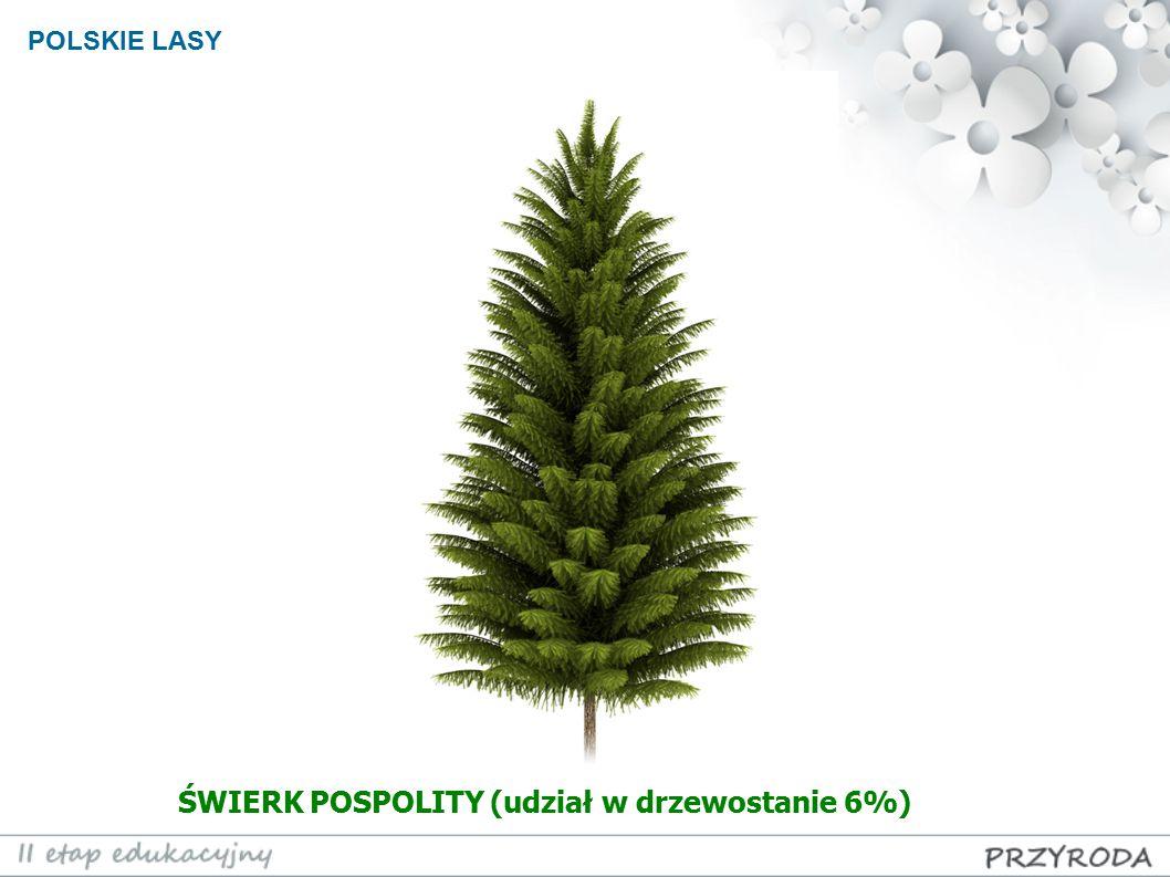 POLSKIE LASY ŚWIERK POSPOLITY (udział w drzewostanie 6%)